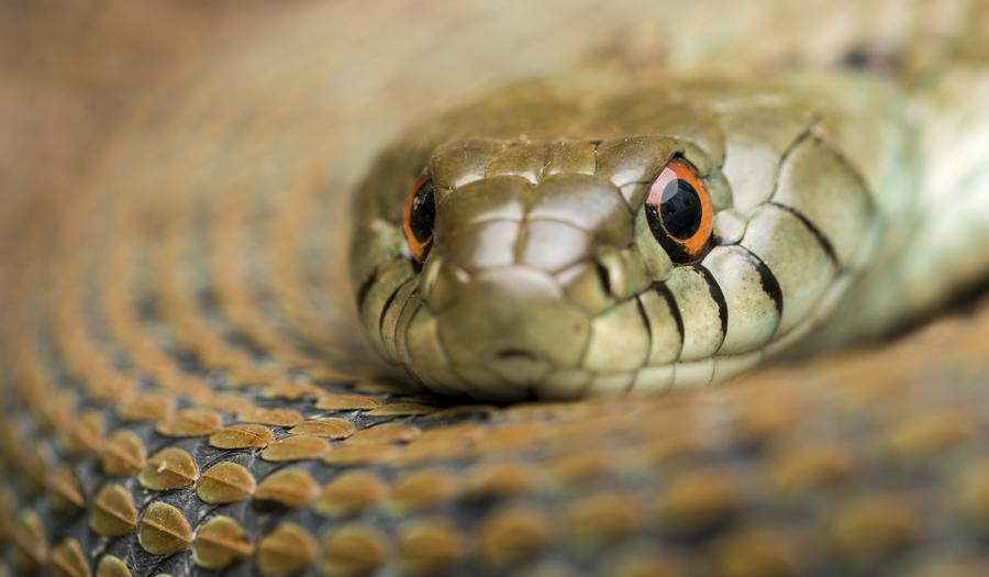 prevenció i control de serps